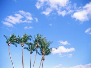 第25回 PPC(環太平洋鑑定会議)バリ島会議に参加して