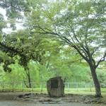 不来方のお城  - 盛岡市盛岡城跡公園 -